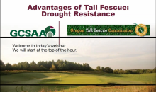 Copy of Time to Give Tall Fescues Strong Consideration?