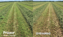 Improving Yield & Quality in Alfalfa with Priaxor