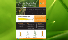 Choosing the right hybrid for your corn silage needs